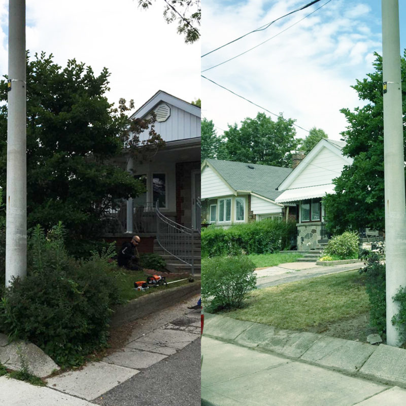 before-after-lawn